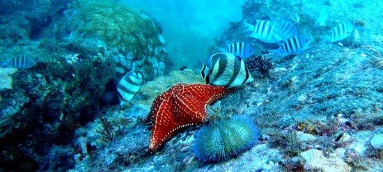 imagem que mostra peixes e outros seres marinhos no fundo do mar